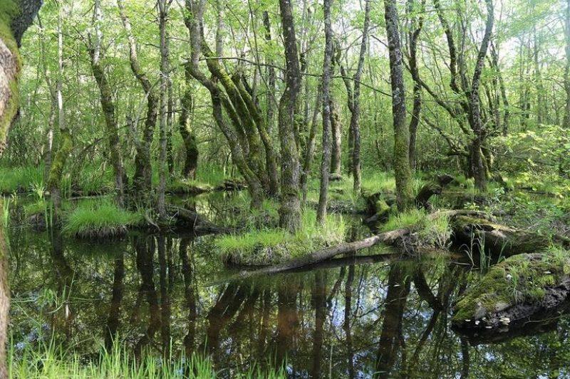 longoz-ormanlari